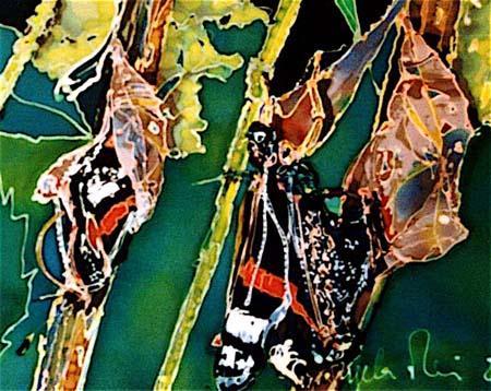 angela-rei-serie-farfalle-004