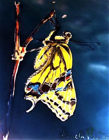 angela-rei-serie-farfalle-014